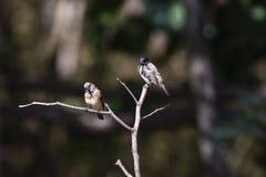 2 mannekins на ветви Стоковые Фото