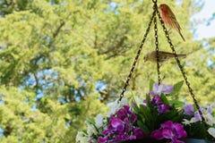 Mannelijk en Vrouwelijk Huis Finches Royalty-vrije Stock Foto