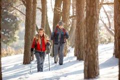 Mannelijk en wijfje die in de winterbos wandelen Stock Afbeeldingen