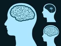 Mannelijk hoofdsilhouet met kleine en grote hersenen Stock Afbeelding