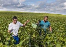 Mannelijke Arbeiders Champagne Vineyard Verzy Stock Foto