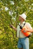 Mannelijke bespuitende boomtakken Royalty-vrije Stock Foto