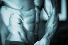 Mannelijke bodybuilder spiermens royalty-vrije stock foto's