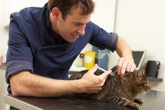 Mannelijke Dierenarts die Kat in Chirurgie onderzoekt Royalty-vrije Stock Foto