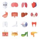 Mannelijke en vrouwelijke anatomie Vectorillustratiereeks menselijke organen vector illustratie