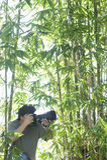 Mannelijke Fotograaf In Bamboo Forest Stock Foto's