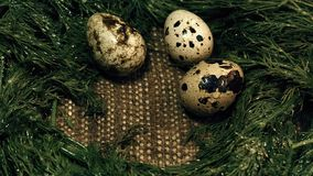 Mannelijke hand De eieren Nestkwartels stock footage