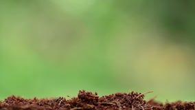 Mannelijke hand die jonge plant planten stock videobeelden