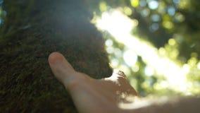 Mannelijke Hand wat betreft Bemoste Boom in Forest Moving-schot Sunflares close-up stock videobeelden