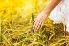 Mannelijke hand wat betreft een gouden tarweoor op het tarwegebied Royalty-vrije Stock Fotografie