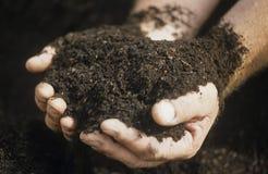 Mannelijke handen die ecologisch gecontroleerde opnieuw samengestelde grond in katoenen aanplanting houden Stock Afbeelding