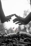 Mannelijke handen die een beschermend gebaar over gevoelige purpere stroom maken stock foto's