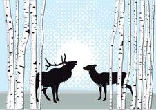 Mannelijke herten en damhinde die zich in bos bevinden Stock Fotografie