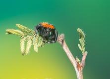 Mannelijke het springen spin Royalty-vrije Stock Fotografie
