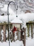 Mannelijke hoofdvogel op de vogelvoeder stock foto's