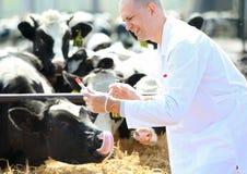 Mannelijke koedierenarts bij   het landbouwbedrijf neemt analyseert stock fotografie