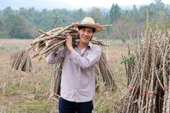 Mannelijke landbouwer status en het lidmaat van de schoudertapioca die samen de stapel in het landbouwbedrijf snijden stock fotografie