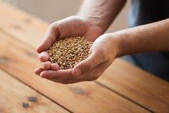 Mannelijke landbouwershanden die mout of graankorrels houden royalty-vrije stock foto