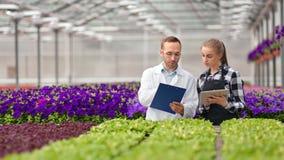 Mannelijke landbouwingenieur en het professionele vrouwelijke landbouwer analyseren die gebruikend tabletpc werken stock videobeelden