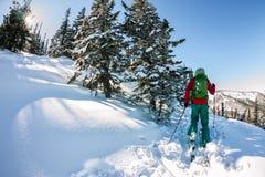 Mannelijke skiërfreeride skitur bergopwaarts in sneeuw in de winterbos royalty-vrije stock fotografie