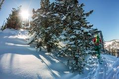 Mannelijke skiërfreeride skitur bergopwaarts in sneeuw in de winterbos stock fotografie