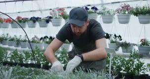 Mannelijke tuinman die etiket nemen aan installatie stock footage