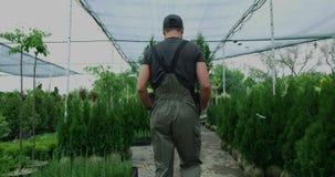 Mannelijke tuinman die thujas geven aan vrouw stock video