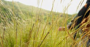 Mannelijke wandelaar wat betreft gras terwijl het lopen in platteland 4k stock footage