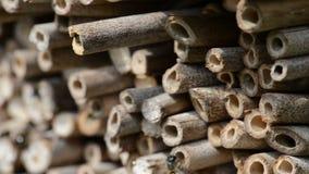 Mannelijke wilde bijen die in de lente bij insectschuilplaats vliegen het zoeken naar vrouwelijke bijen stock videobeelden