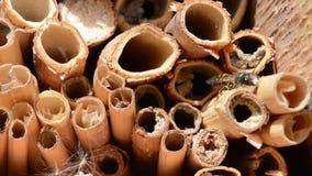 Mannelijke wilde bijen die in de lente bij insectschuilplaats vliegen het zoeken naar vrouwelijke bijen stock footage