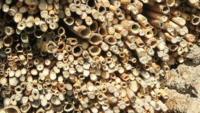 Mannelijke wilde bijen die in de lente bij insectschuilplaats vliegen het zoeken naar vrouwelijke bijen stock video