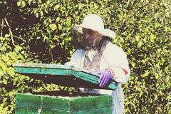 Mannen arbetar i en bikupa som samlar bihonung Arkivfoto