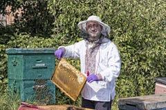 Mannen arbetar i en bikupa som samlar bihonung Royaltyfri Fotografi