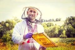 Mannen arbetar i en bikupa som samlar bihonung Fotografering för Bildbyråer