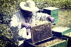 Mannen arbetar i en bikupa som samlar bihonung Arkivfoton