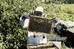Mannen arbetar i en bikupa som samlar bihonung Royaltyfri Foto