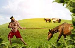 Mannen drar en häst Royaltyfri Foto