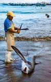 Mannen förbereder sig att klippa fena av hajar på stranden Arkivfoton