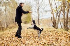 Mannen går i nedgången med en hund som spanieln med långa öron i hösten parkerar Hunden stojar och spelar på naturen i höstguling arkivfoto