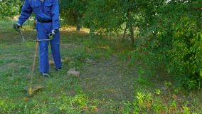 Mannen går med gräsklipparen och mejar gräs på den soliga sommardagen arkivfilmer