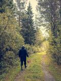Mannen går på en skogväg med en korg arkivbilder