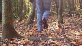 Mannen går till och med en höstskog i slorörelse arkivfilmer