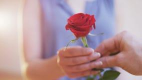 Mannen ger en röd ros till en kvinna stock video