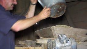 Mannen häller organiskt skördat havrekorn in i den retro sikta maskinen med hinken stock video