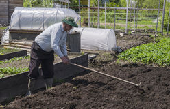 Mannen i landet gör hålen för att plantera potatisar Arkivfoton