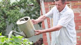 Mannen i trädgården som bevattnar växterna från bevattna kan stock video