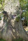 Mannen inom ett tjockt träd i parkerar i Prenn, Da-laten, Vietnam royaltyfria foton