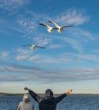 Mannen inviterar seagullsna Royaltyfria Foton