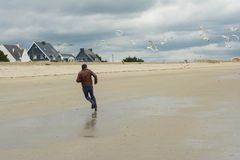 Mannen kör bort Grupp av seagullfåglar Arkivbilder