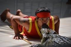 Mannen kysser krokodilen Krokodilshow på den Phuket zoo, Thailand - December 2015: krokodilshow på krokodillantgården royaltyfri fotografi